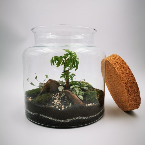 Photo Terrarium Jungle - Photo n°1