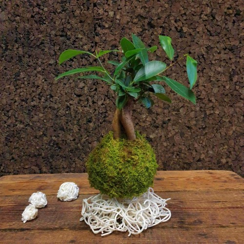 Kokedama Céramique - Photo n°2